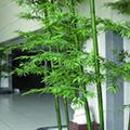 人工植物・樹脂製プランター