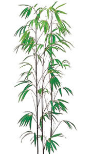 黒竹(3本立)