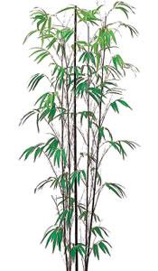 黒竹(5本立)