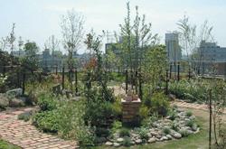 屋上の緑化と自動散水システム
